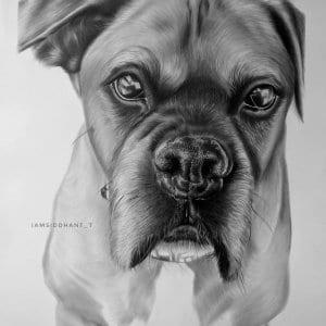 Dog Pencil Portrait Hyper Realistic Portrait-Siddhant